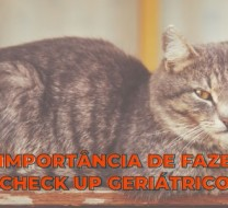 a importancia de uum check up geriatrico blog