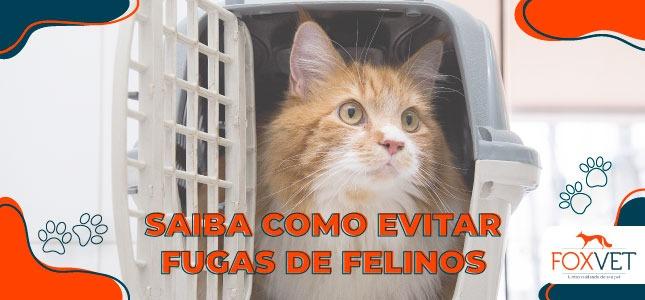 como evitar fugas de felinos blog