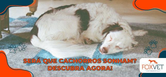 cachorros sonham blog